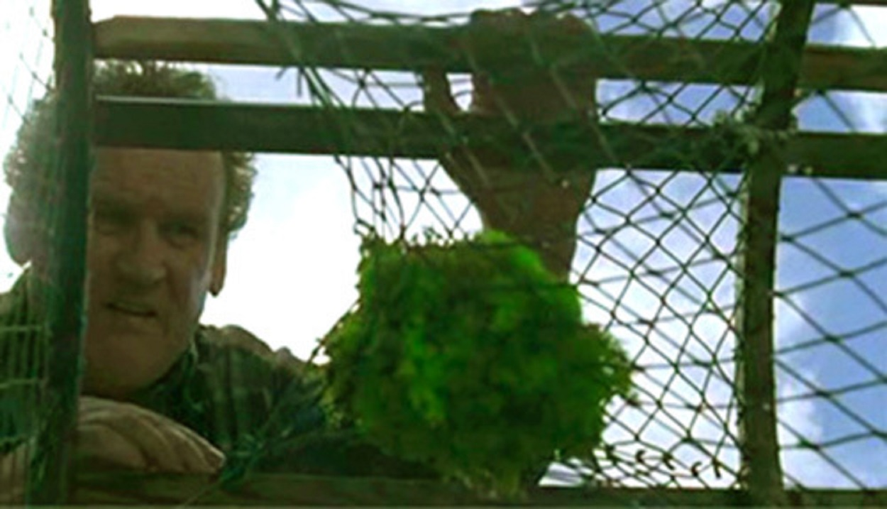 Colm Meaney discovers the miracle-healing moss in his fishing pot in A Lobster Tale (2006)