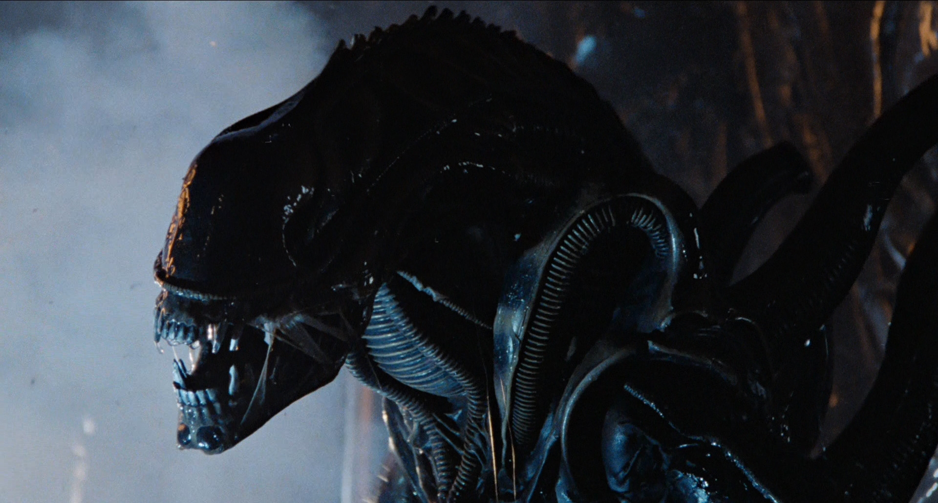 The alien in Alien (1979)