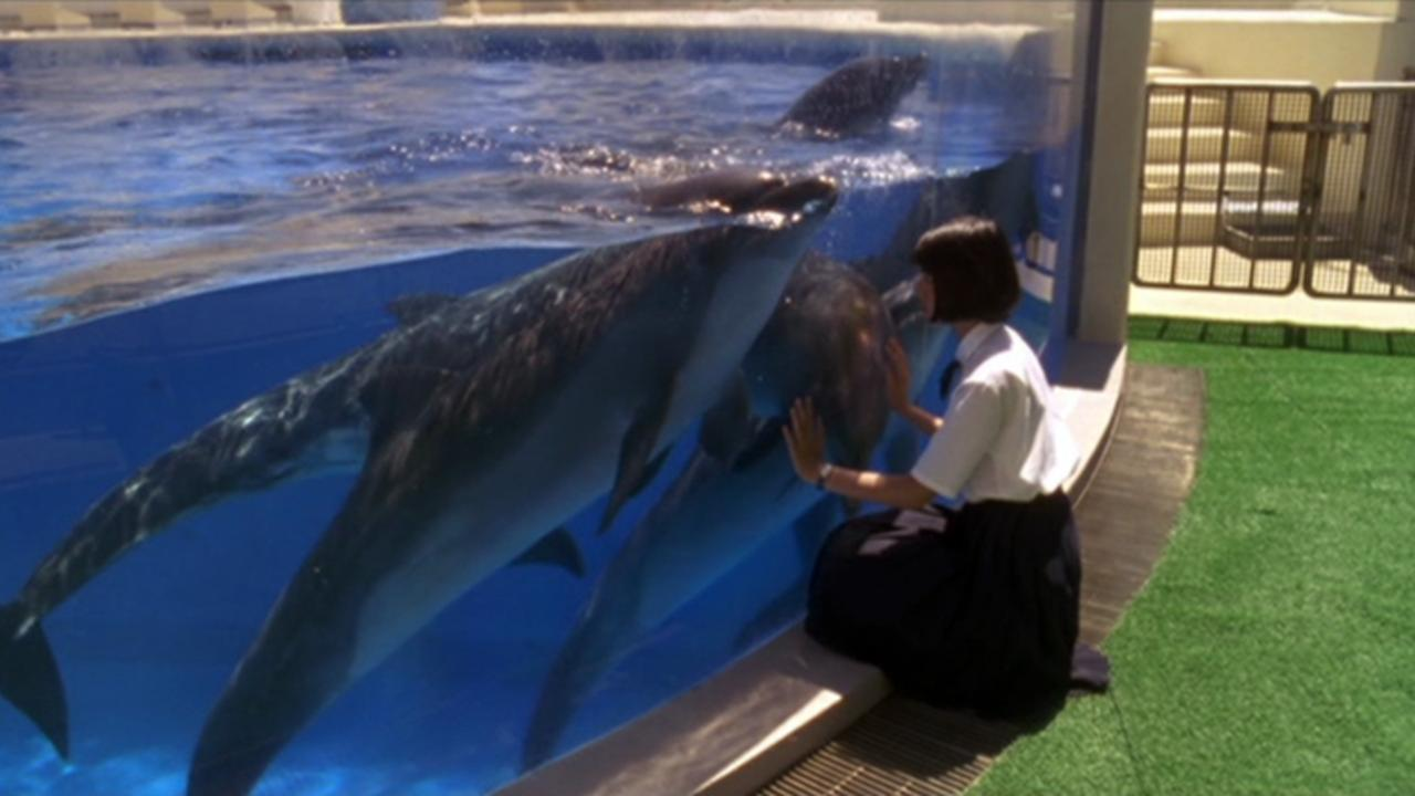 Schoolgirl Komine Rena with the dolphins in August in the Water (1995)