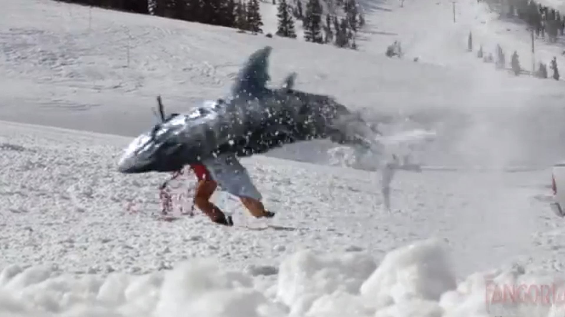 Shark attack scene from Avalanche Sharks (2013)