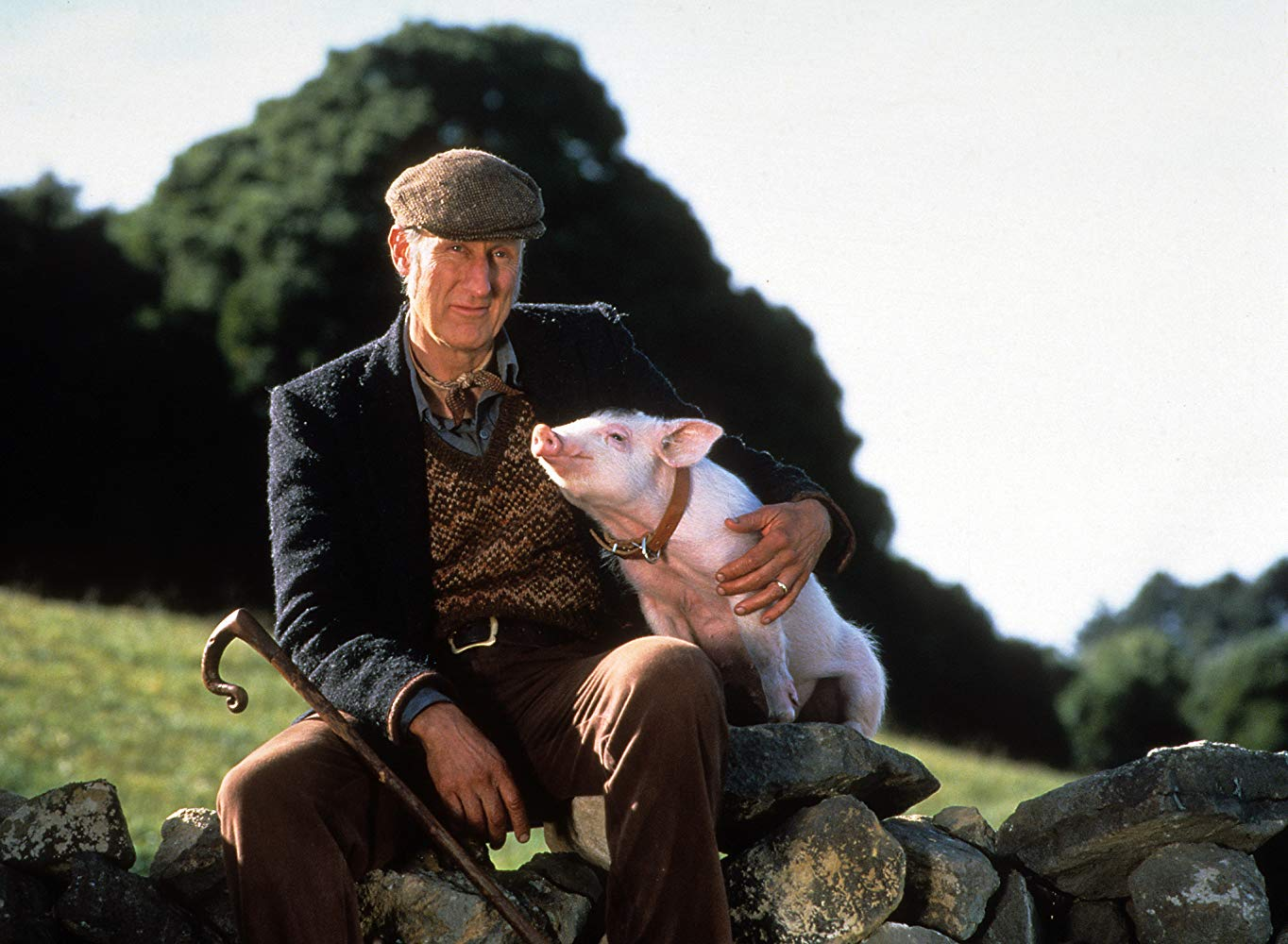 Farmer Hoggett (James Cromwell) and Babe in Babe (1995)