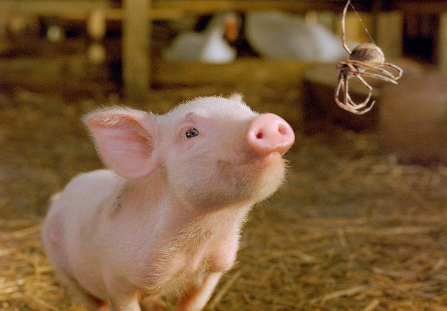 Wilbur (voiced by Dominic Scott Kay) talks to Charlotte (voiced by Julia Roberts) in Charlotte's Web (2006)
