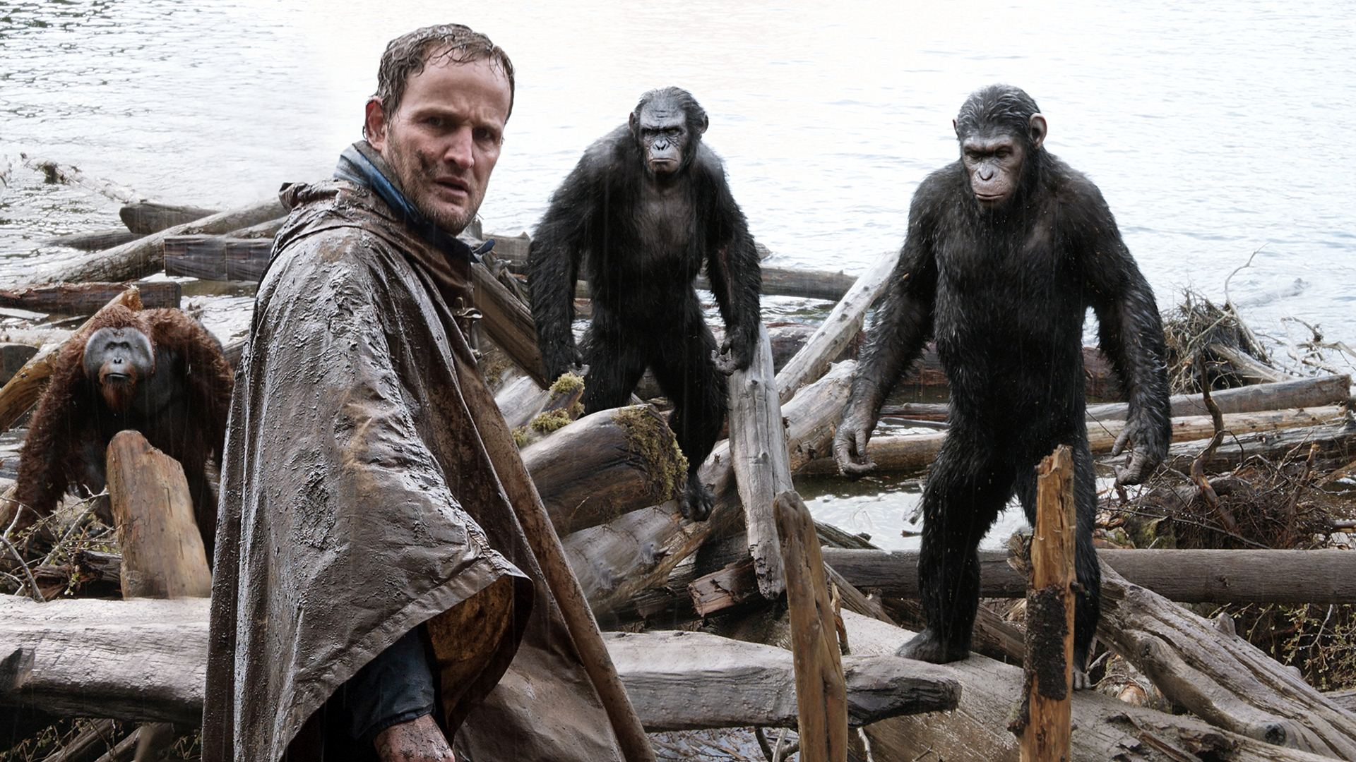 The human Malcolm (Jason Clarke) tries to negotiate with the apes Maurice (Karin Konoval), Koba (Toby Kebbell) and Caesar (Andy Serkis) in Dawn of the Planet of the Apes (2014)