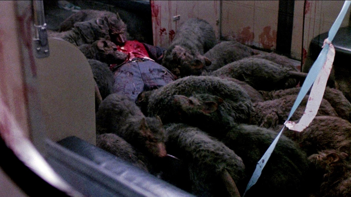 The killer rats (played by dachshunds) in Deadly Eyes (1982)