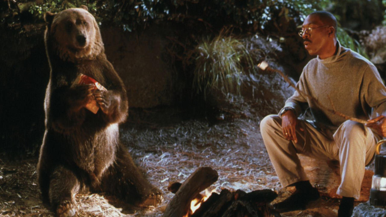 Dr Dolittle (Eddie Murphy) tries to introduce the circus bear Archie to the wild in Dr. Dolittle 2 (2001)