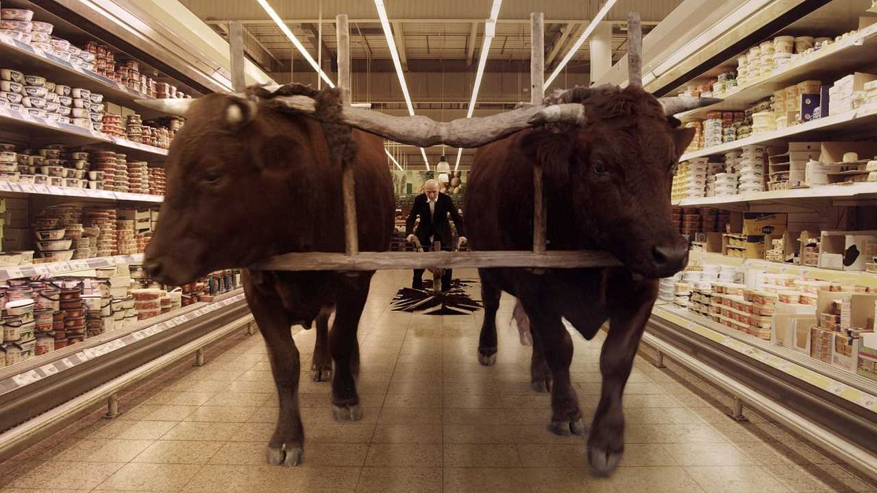 The old man plowing a supermarket with two harnessed bulls in Field of Dogs (2014)