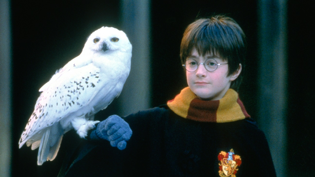 Daniel Radcliffe as Harry Potter with Hedwig the owl in Harry Potter and the Sorcerer's Stone (2001)