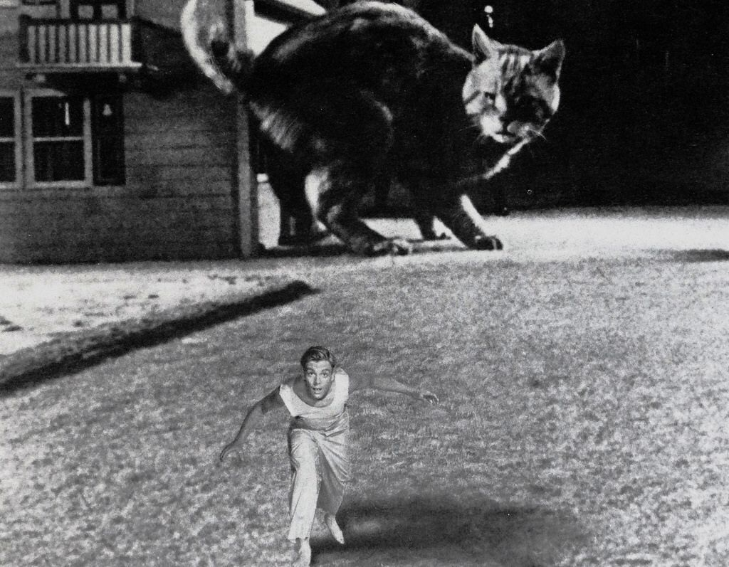 Scott Carey (Grant Williams) flees from a cat in The Incredible Shrinking Man (1957)