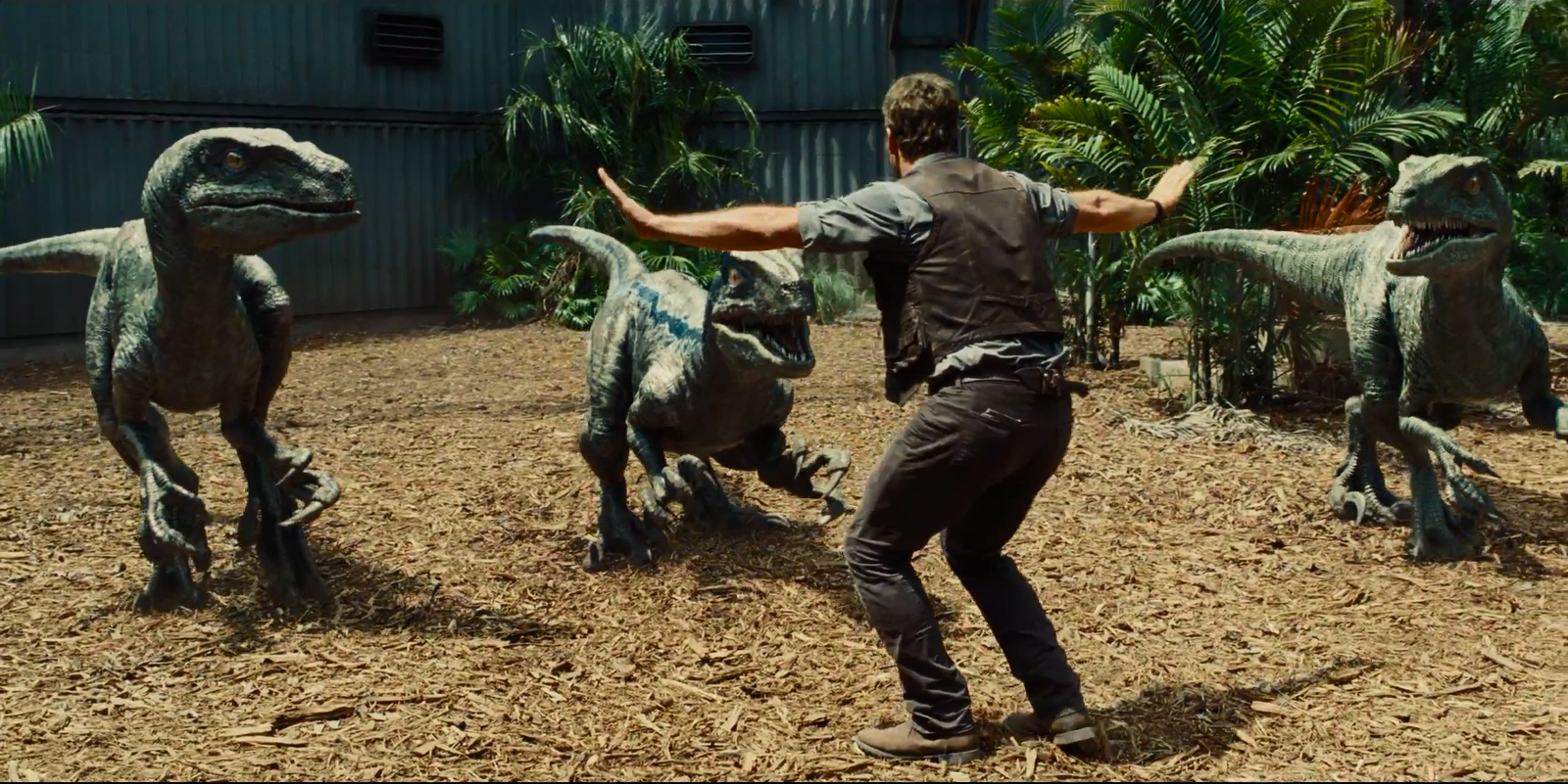 Owen Grady (Chris Pratt) velociraptor tamer in Jurassic World (2015)