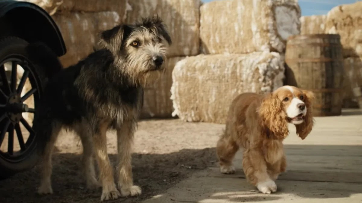 (l to r) Tramp (voiced by Justin Theroux) and Lady (voiced by Tessa Thompson) in Lady and the Tramp (2019)