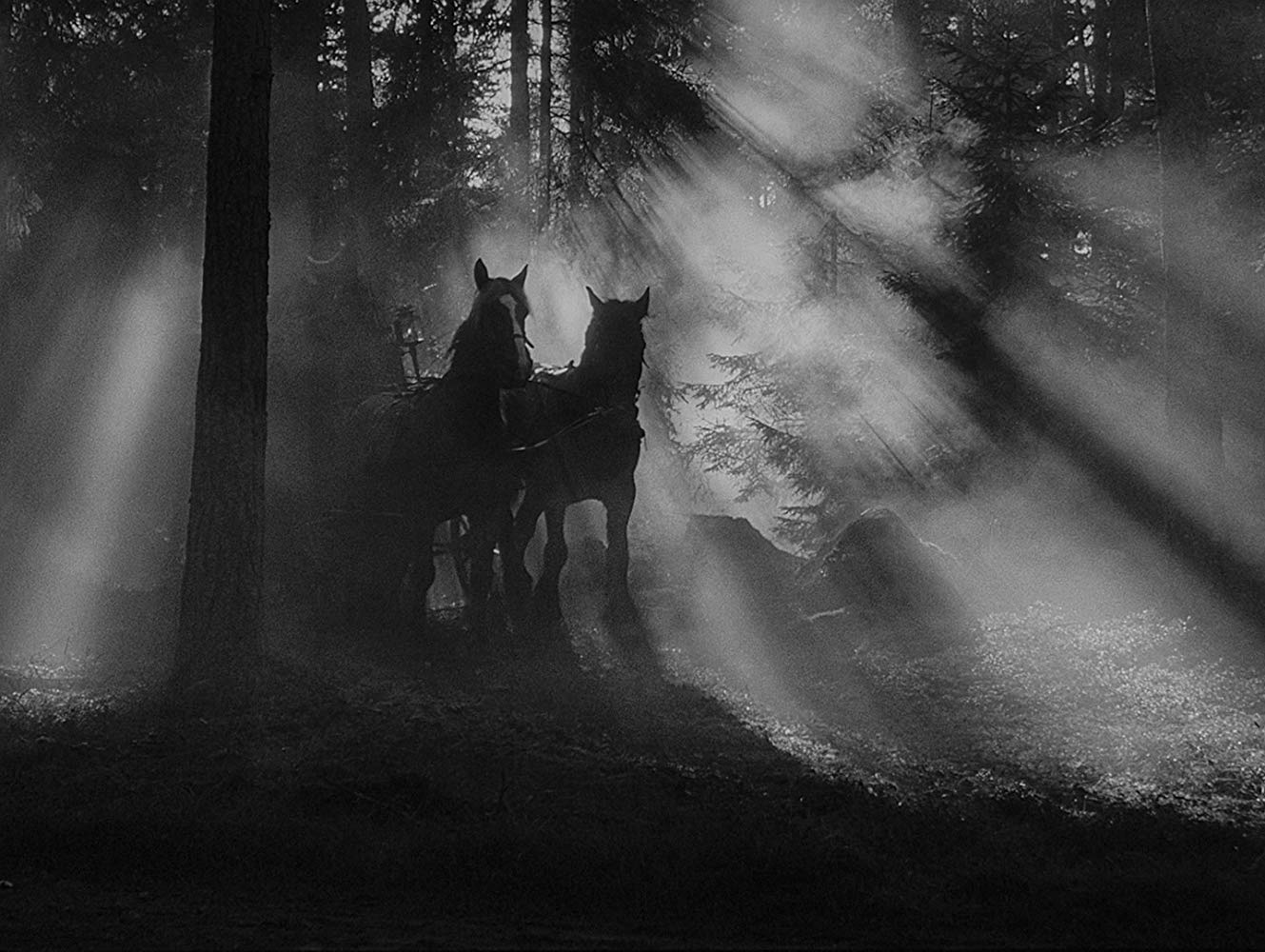 The incredibly haunted opening carriage journey through the forest in The Magician (1958)