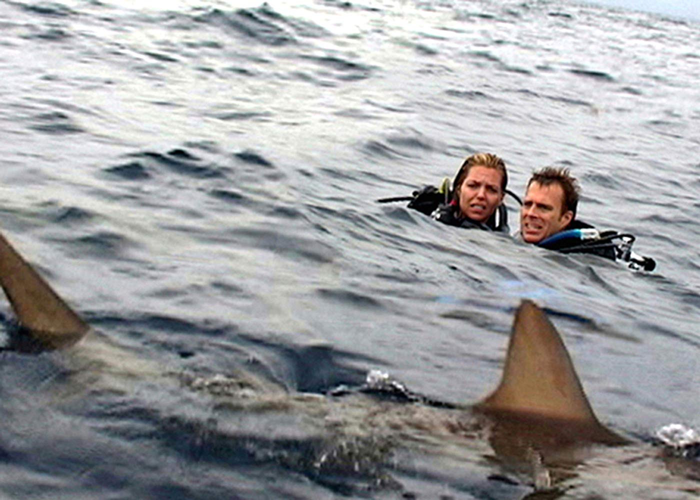 Blanchard Ryan and Daniel Travis stranded in a sea of sharks in Open Water (2003)