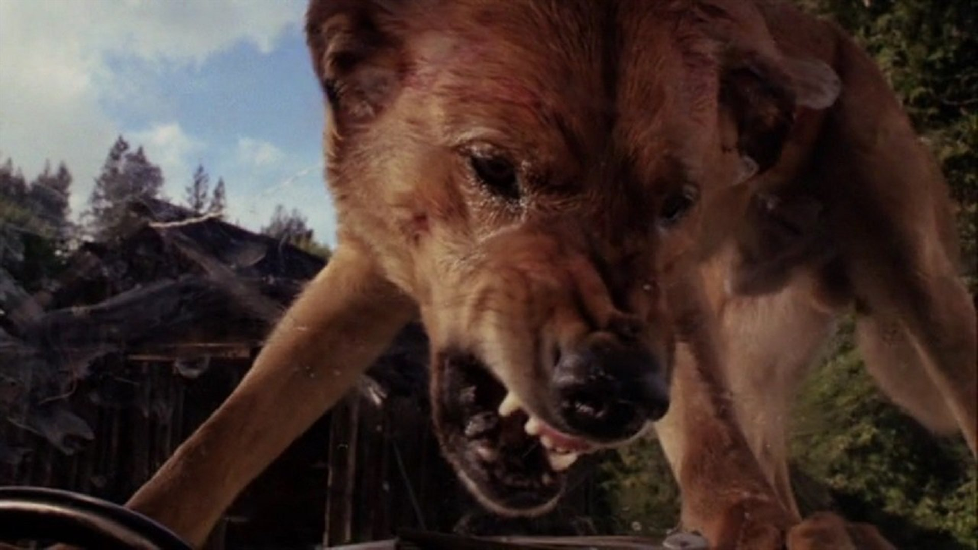 Killer dogs in The Pack (1977)