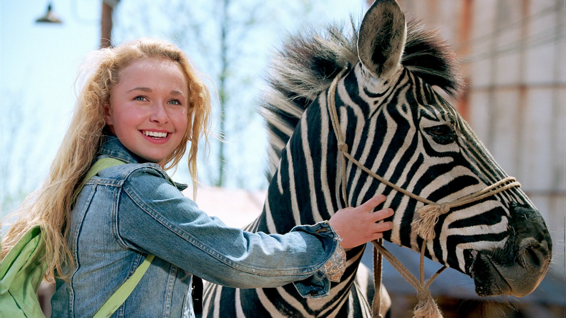 Hayden Panettiere and Stripes the zebra in Racing Stripes (2005)