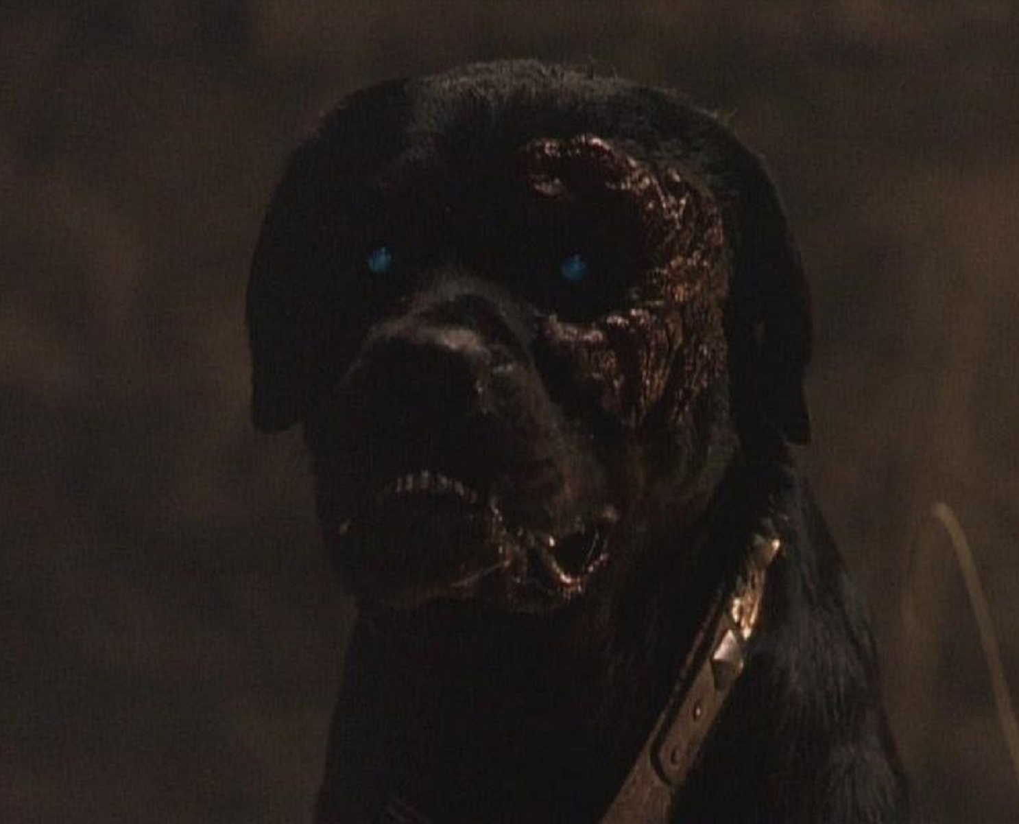 The dog from Rottweiler (2004)