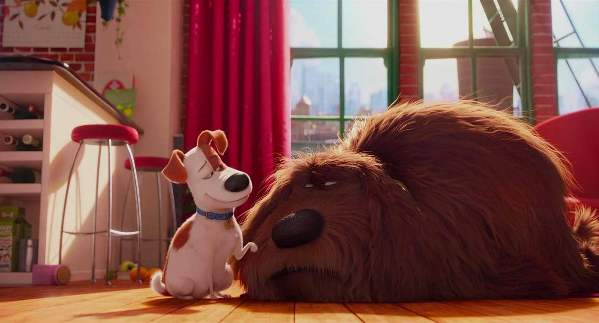 (l to r) Max (voiced by Louis C.K) resentful of the new housemate Duke (voiced by Eric Stonestreet) in The Secret Life of Pets (2016)