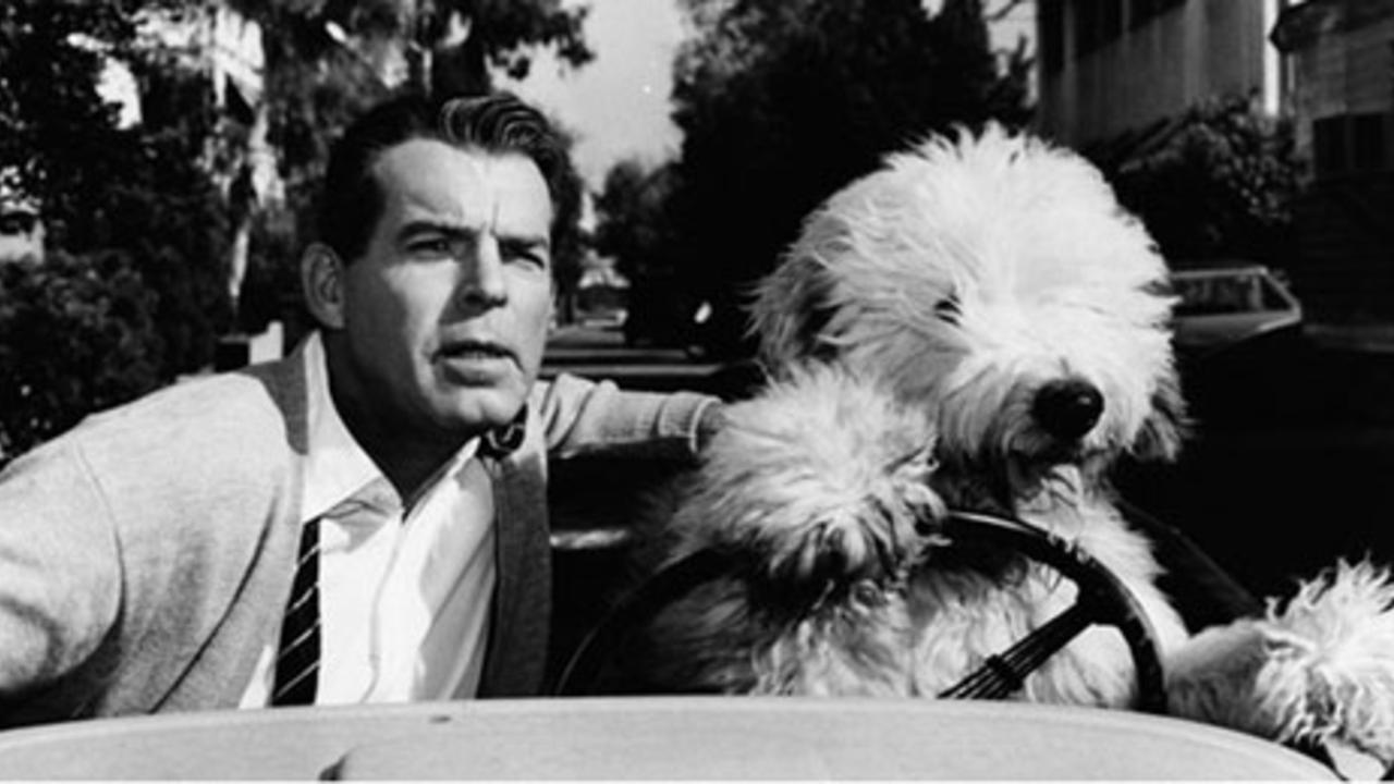 Fred MacMurray with his son Wilby transformed into a dog in The Shaggy Dog (1959)