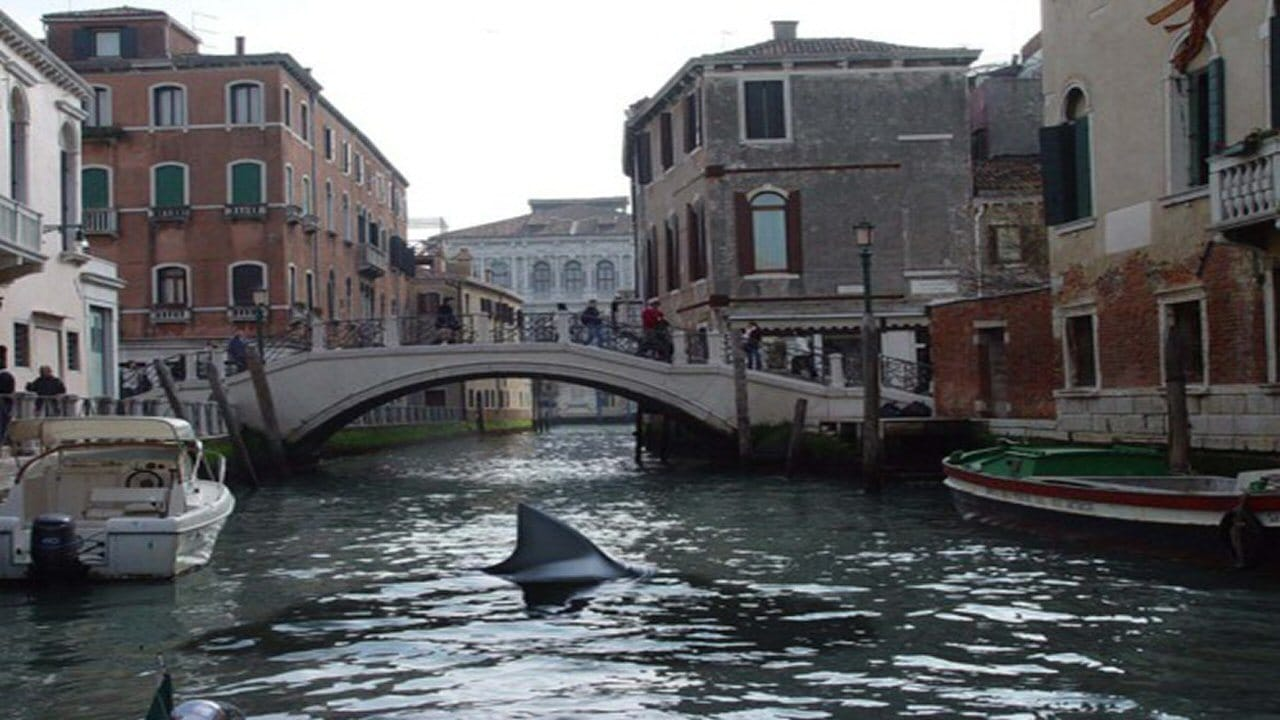 A shark prowls the canals of Venice in Shark in Venice (2008)