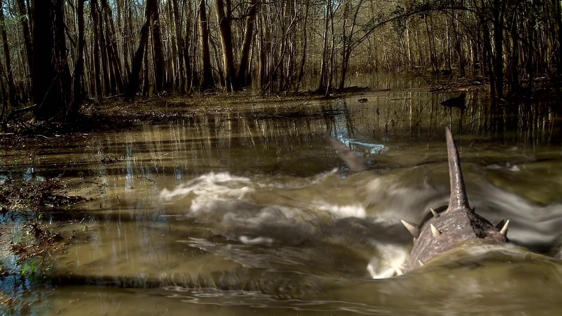 Shark in the swamp in Sharkansas Women's Prison Massacre (2016)