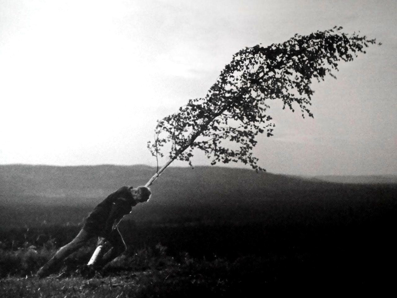 Max Von Sydow wrestles with a sapling in The Virgin Spring (1959)