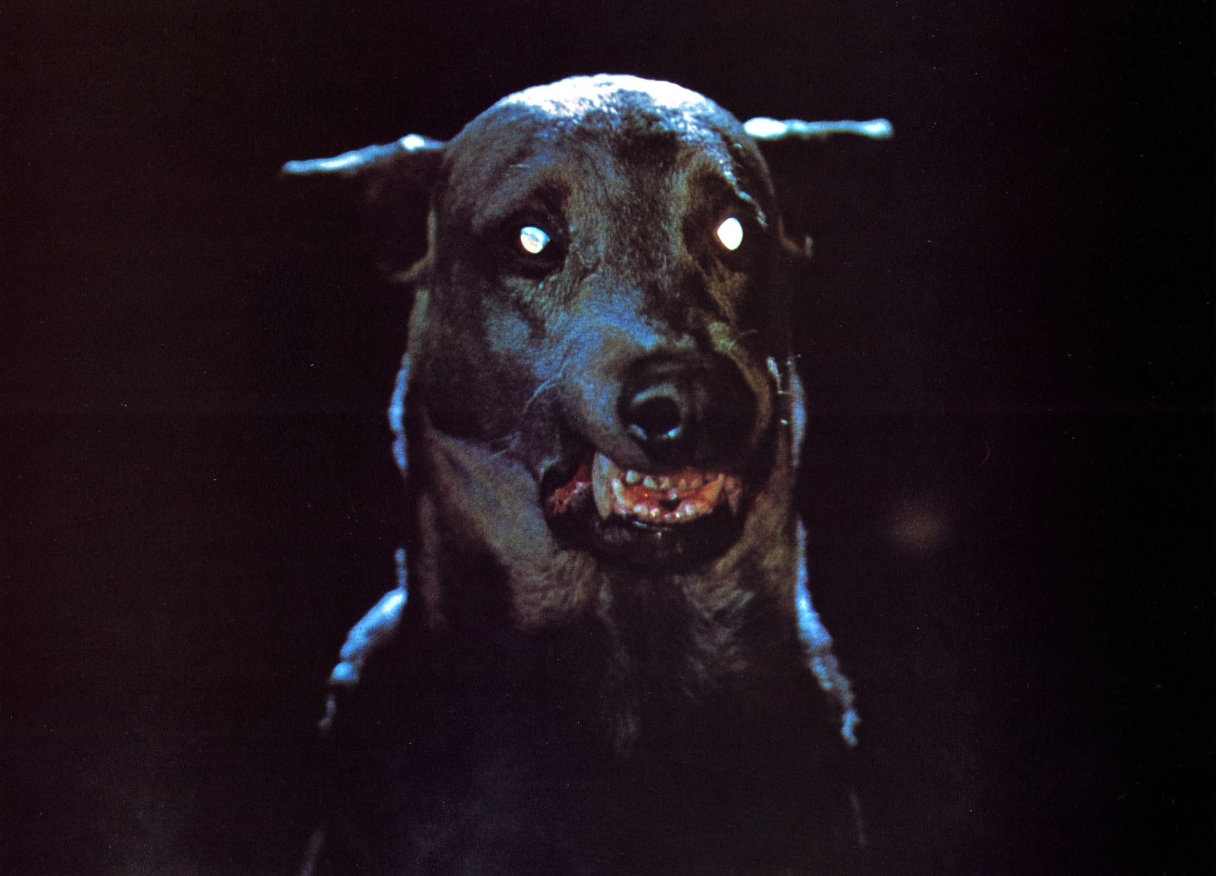 Zoltan in Zoltan ... Hound of Dracula/Dracula's Dog (1978)