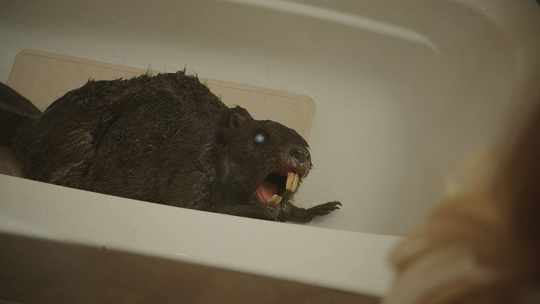 A zombeaver from Zombeavers (2014)