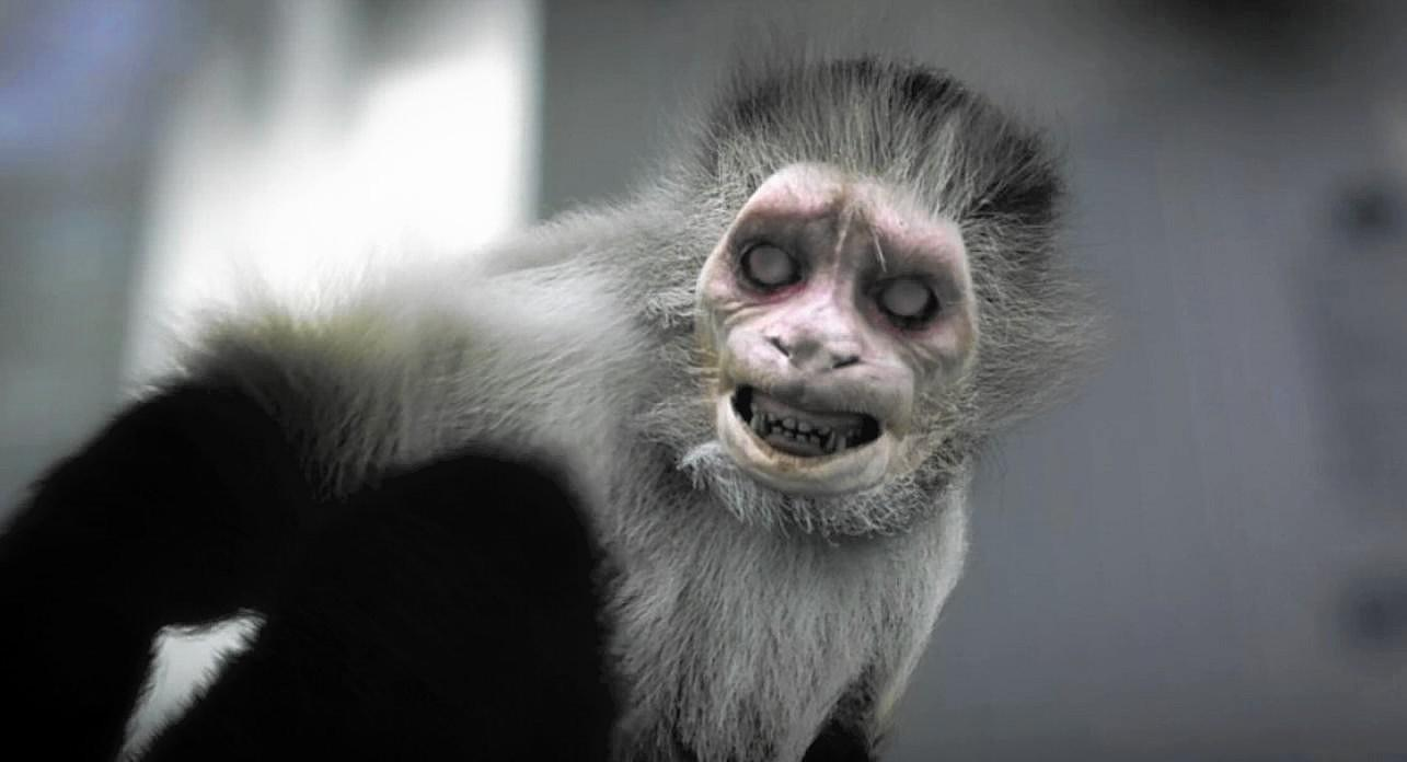 A zombified zoo monkey in Zoombies (2016)